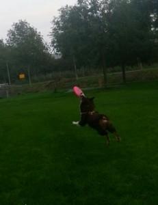dog-frisbee-0