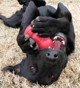 Kong met hond2