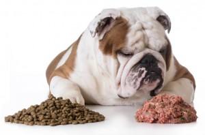 hond-met-brok-en-vers-vlees