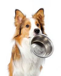 hond-met-voerbak